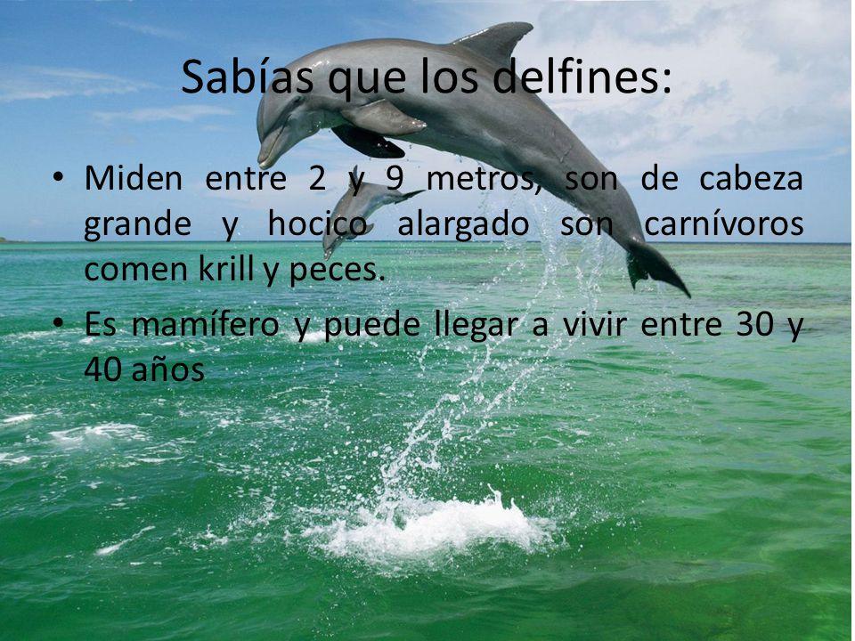 Sabías que los delfines: Miden entre 2 y 9 metros, son de cabeza grande y hocico alargado son carnívoros comen krill y peces. Es mamífero y puede lleg