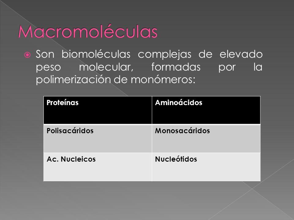 Son biomoléculas complejas de elevado peso molecular, formadas por la polimerización de monómeros: ProteínasAminoácidos PolisacáridosMonosacáridos Ac.