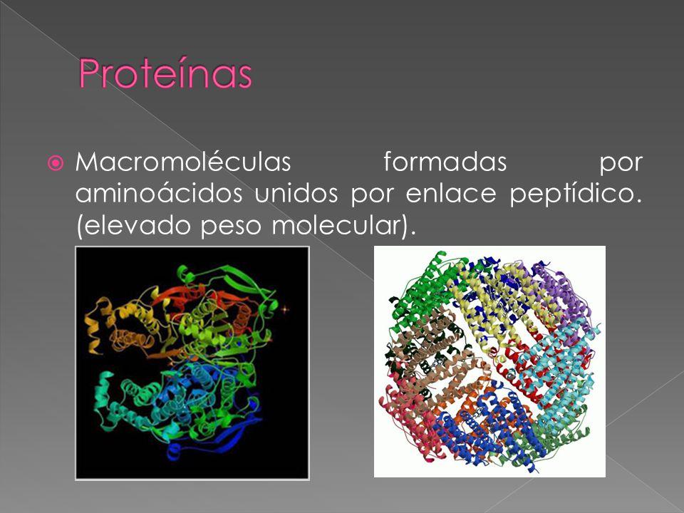 Macromoléculas formadas por aminoácidos unidos por enlace peptídico. (elevado peso molecular).