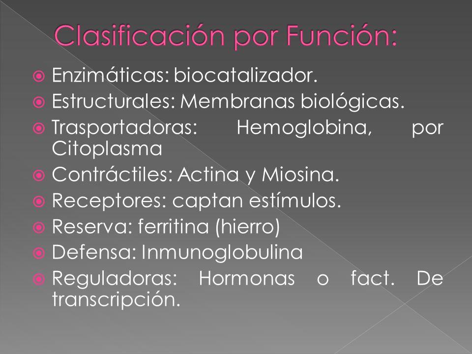 Enzimáticas: biocatalizador.Estructurales: Membranas biológicas.