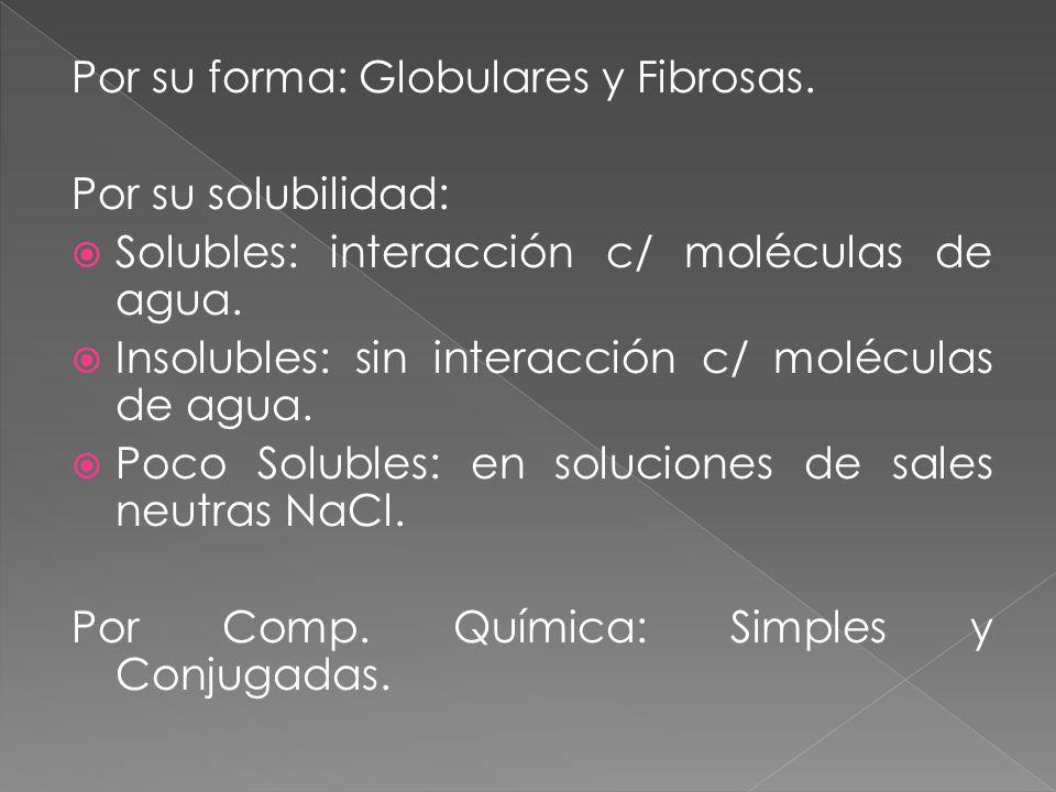 Por su forma: Globulares y Fibrosas.
