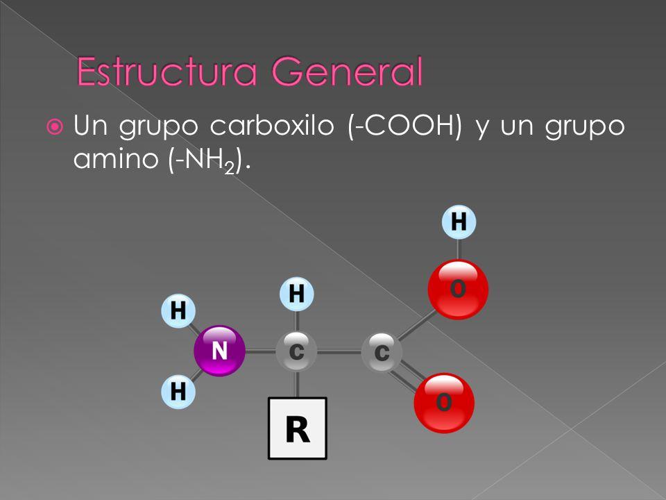 Un grupo carboxilo (-COOH) y un grupo amino (-NH 2 ).