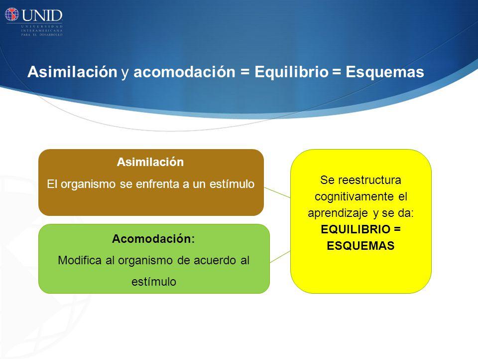 Asimilación y acomodación = Equilibrio = Esquemas Asimilación El organismo se enfrenta a un estímulo Acomodación: Modifica al organismo de acuerdo al
