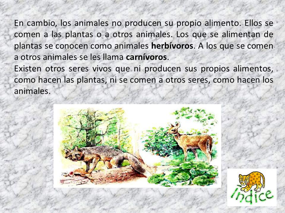 En cambio, los animales no producen su propio alimento. Ellos se comen a las plantas o a otros animales. Los que se alimentan de plantas se conocen co
