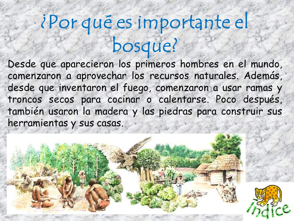 ¿Por qué es importante el bosque? Desde que aparecieron los primeros hombres en el mundo, comenzaron a aprovechar los recursos naturales. Además, desd