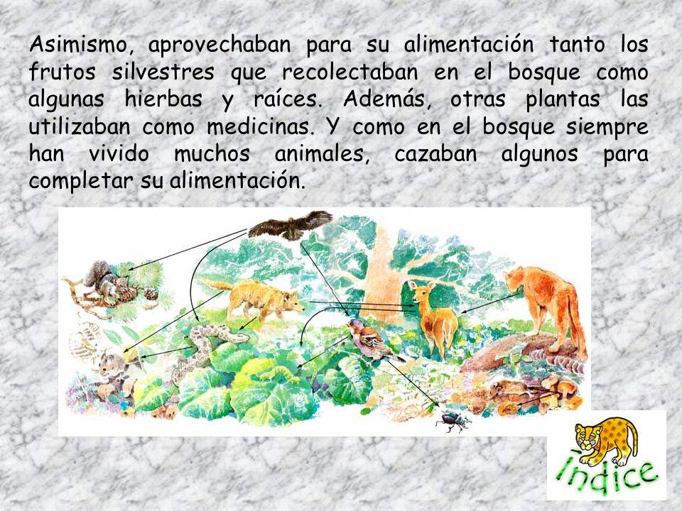 Asimismo, aprovechaban para su alimentación tanto los frutos silvestres que recolectaban en el bosque como algunas hierbas y raíces. Además, otras pla