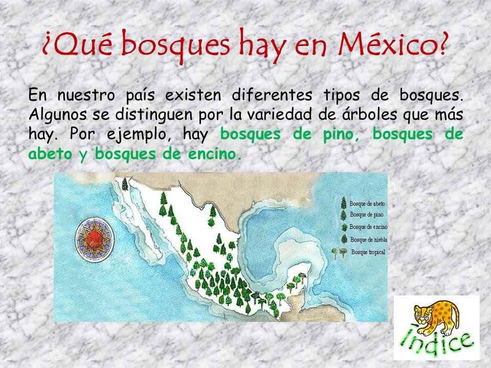 ¿Qué bosques hay en México? En nuestro país existen diferentes tipos de bosques. Algunos se distinguen por la variedad de árboles que más hay. Por eje