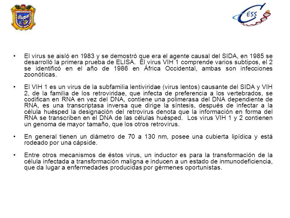 El virus se aisló en 1983 y se demostró que era el agente causal del SIDA, en 1985 se desarrolló la primera prueba de ELISA. El virus VIH 1 comprende
