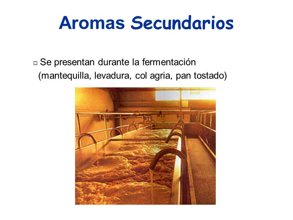 Aromas Secundarios Se presentan durante la fermentación (mantequilla, levadura, col agria, pan tostado)