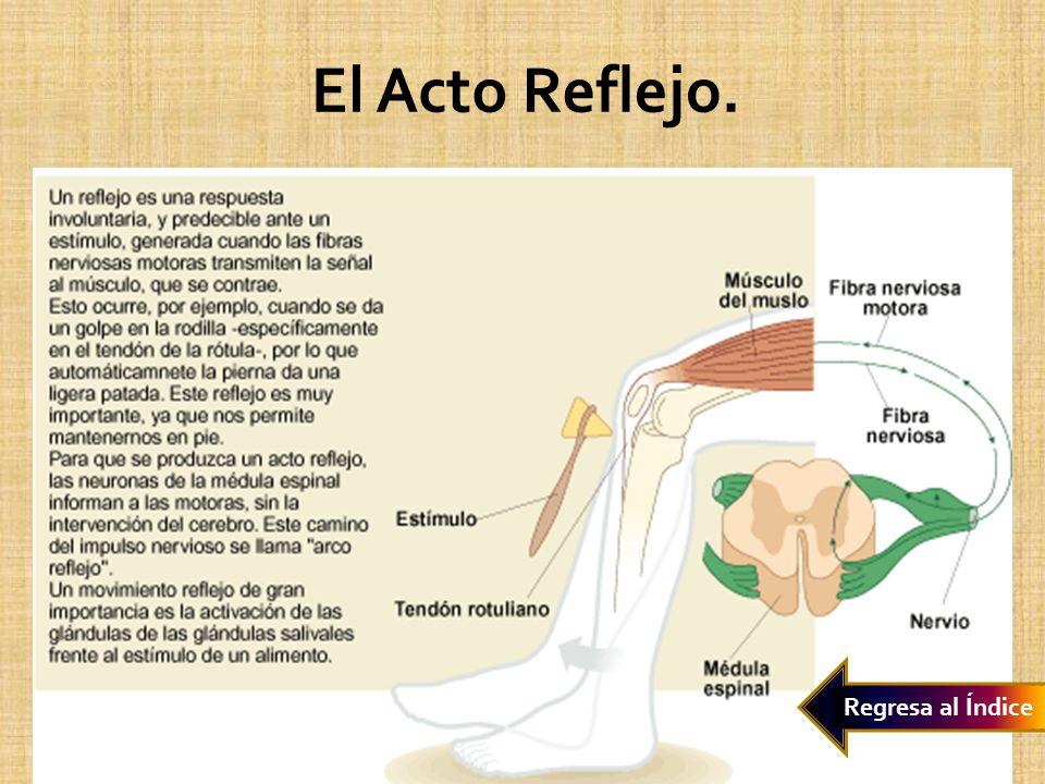 Sistema Reproductor Femenino.Órganos Asociados Ovarios Trompas de Falopio.