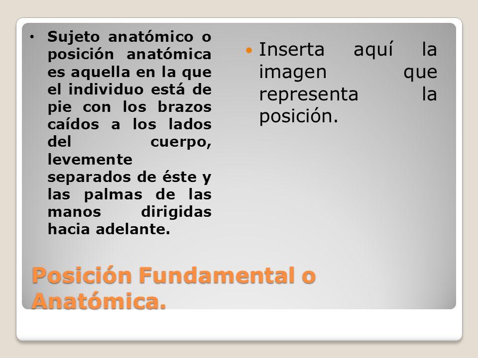 Posición Fundamental o Anatómica. Inserta aquí la imagen que representa la posición. Sujeto anatómico o posición anatómica es aquella en la que el ind