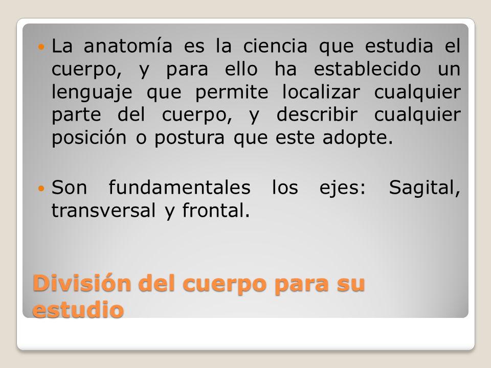 División del cuerpo para su estudio La anatomía es la ciencia que estudia el cuerpo, y para ello ha establecido un lenguaje que permite localizar cualquier parte del cuerpo, y describir cualquier posición o postura que este adopte.