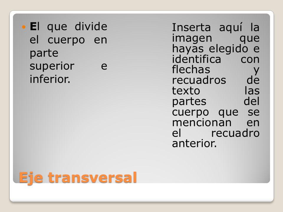 Eje transversal El que divide el cuerpo en parte superior e inferior. Inserta aquí la imagen que hayas elegido e identifica con flechas y recuadros de