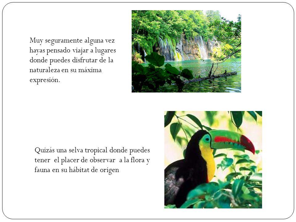Quizás una selva tropical donde puedes tener el placer de observar a la flora y fauna en su hábitat de origen Muy seguramente alguna vez hayas pensado viajar a lugares donde puedes disfrutar de la naturaleza en su máxima expresión.