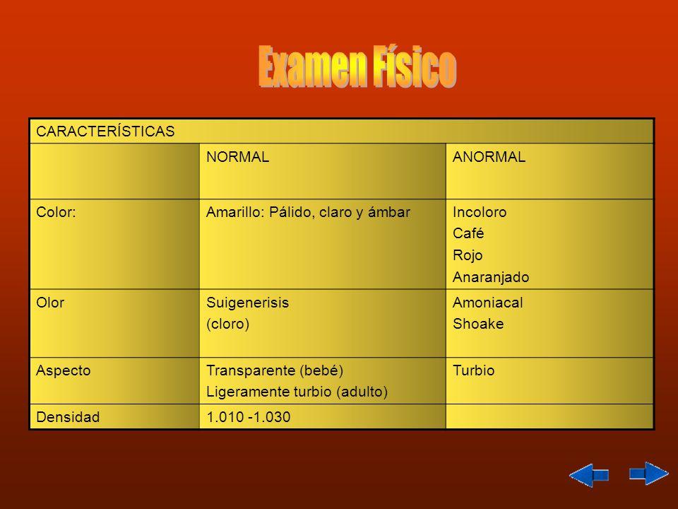 CARACTERÍSTICAS NORMALANORMAL Color:Amarillo: Pálido, claro y ámbarIncoloro Café Rojo Anaranjado OlorSuigenerisis (cloro) Amoniacal Shoake AspectoTransparente (bebé) Ligeramente turbio (adulto) Turbio Densidad1.010 -1.030