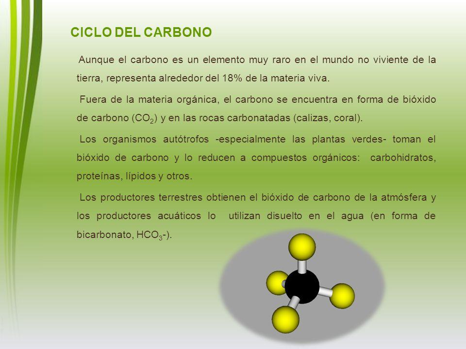 CICLO DEL CARBONO Aunque el carbono es un elemento muy raro en el mundo no viviente de la tierra, representa alrededor del 18% de la materia viva. Fue
