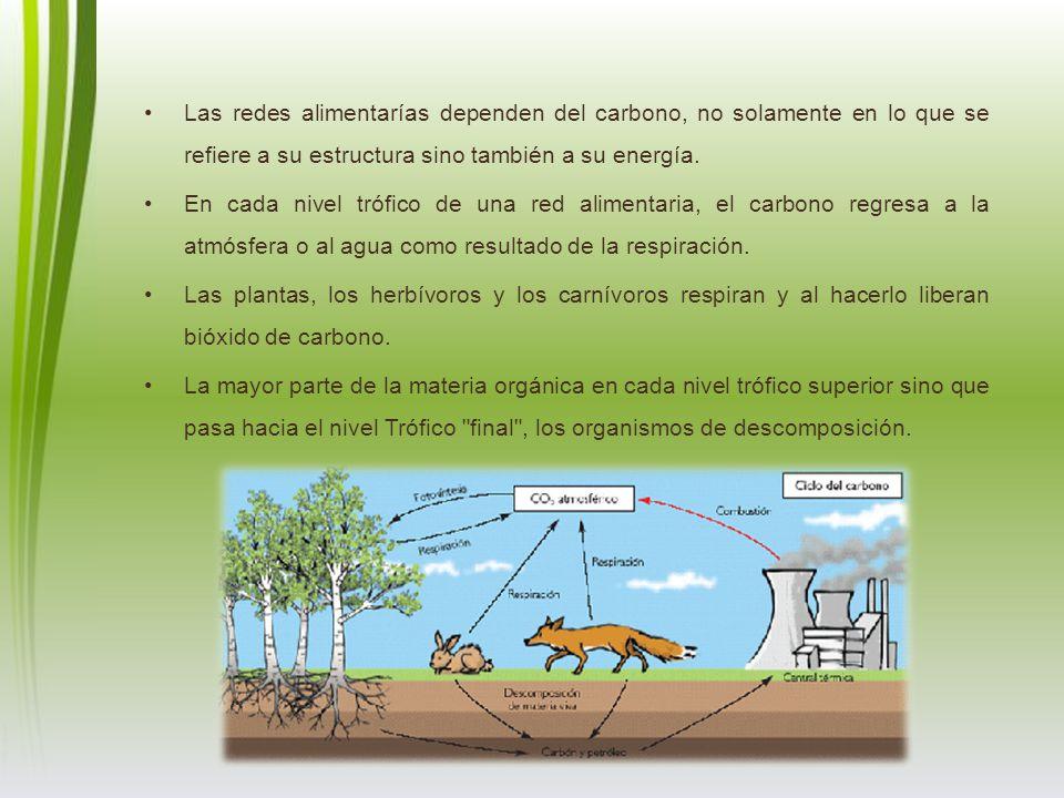 Las redes alimentarías dependen del carbono, no solamente en lo que se refiere a su estructura sino también a su energía. En cada nivel trófico de una