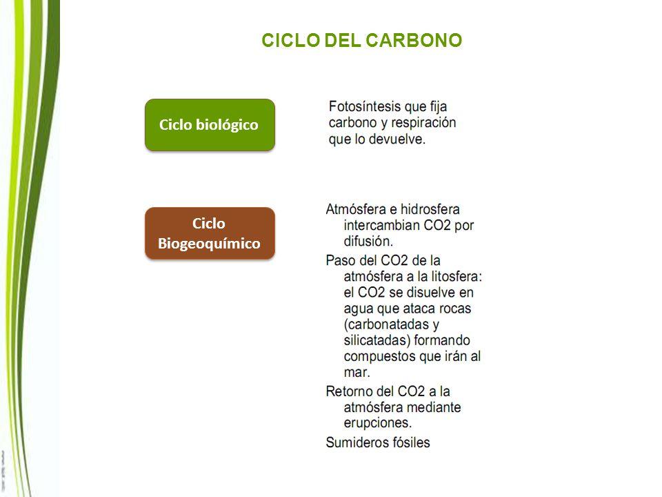 Ciclo biológico Ciclo Biogeoquímico CICLO DEL CARBONO