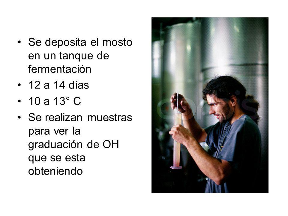 Se deposita el mosto en un tanque de fermentación 12 a 14 días 10 a 13° C Se realizan muestras para ver la graduación de OH que se esta obteniendo