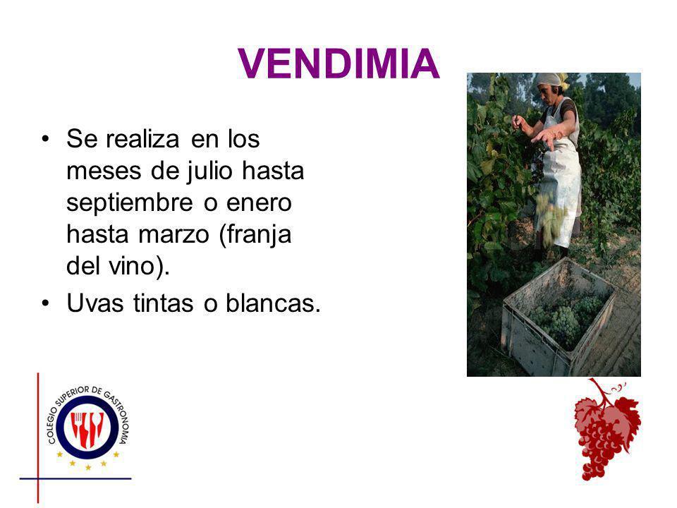 VENDIMIA Se realiza en los meses de julio hasta septiembre o enero hasta marzo (franja del vino). Uvas tintas o blancas.