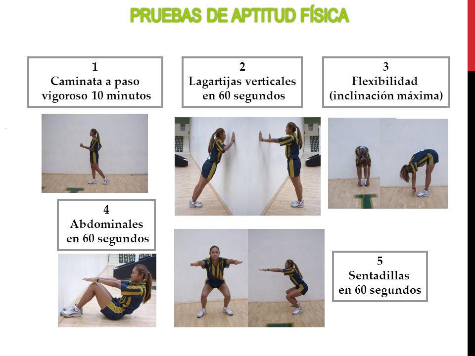 5 Sentadillas en 60 segundos 2 Lagartijas verticales en 60 segundos 4 Abdominales en 60 segundos 1 Caminata a paso vigoroso 10 minutos 3 Flexibilidad
