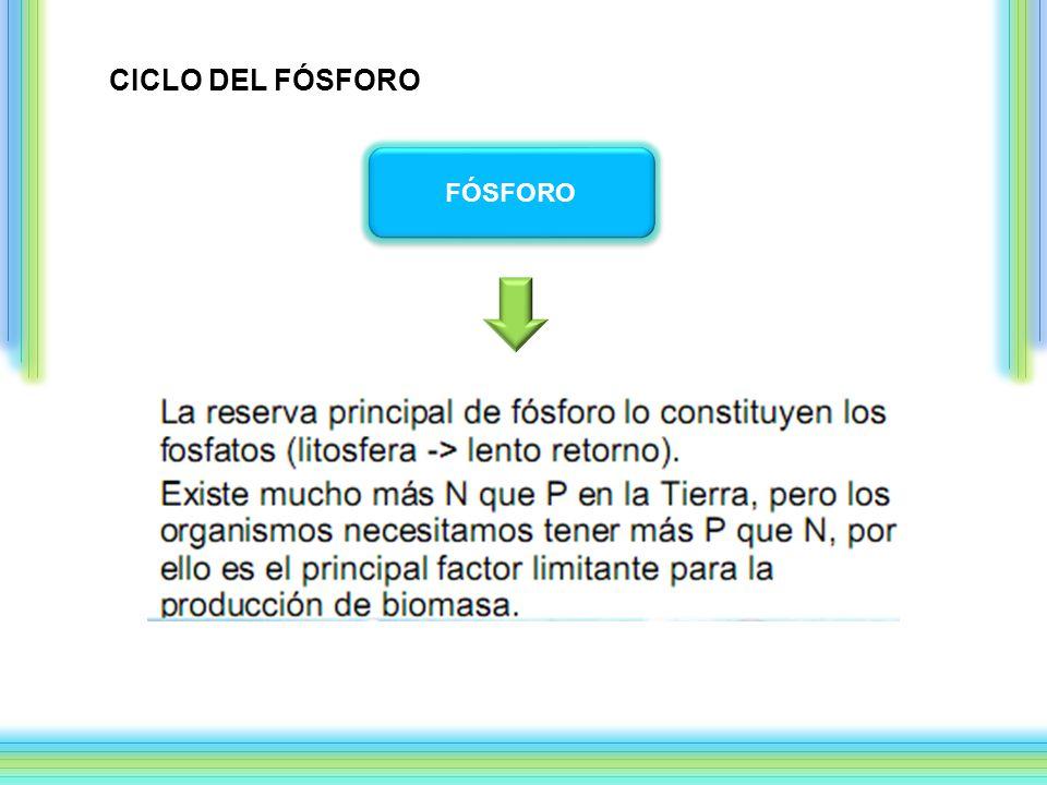 CICLO DEL FÓSFORO FÓSFORO
