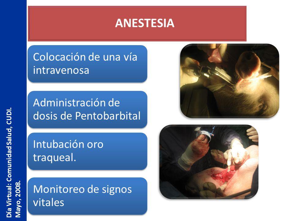 ANESTESIA Colocación de una vía intravenosa Administración de dosis de Pentobarbital Intubación oro traqueal. Monitoreo de signos vitales Día Virtual: