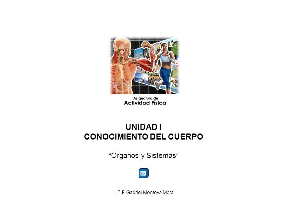 UNIDAD I CONOCIMIENTO DEL CUERPO Órganos y Sistemas L.E.F Gabriel Montoya Mora