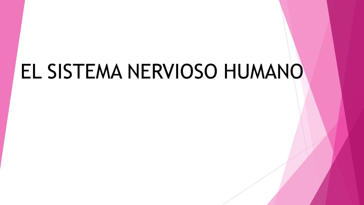 Todos los pensamientos, los sentimientos, las percepciones y los actos, son producto del sistema nervioso humano.