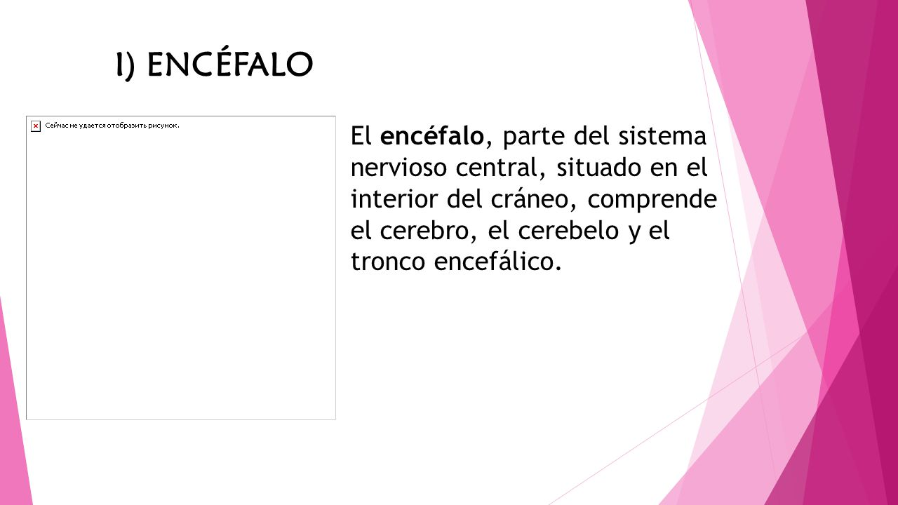 El encéfalo, parte del sistema nervioso central, situado en el interior del cráneo, comprende el cerebro, el cerebelo y el tronco encefálico. I) ENCÉF