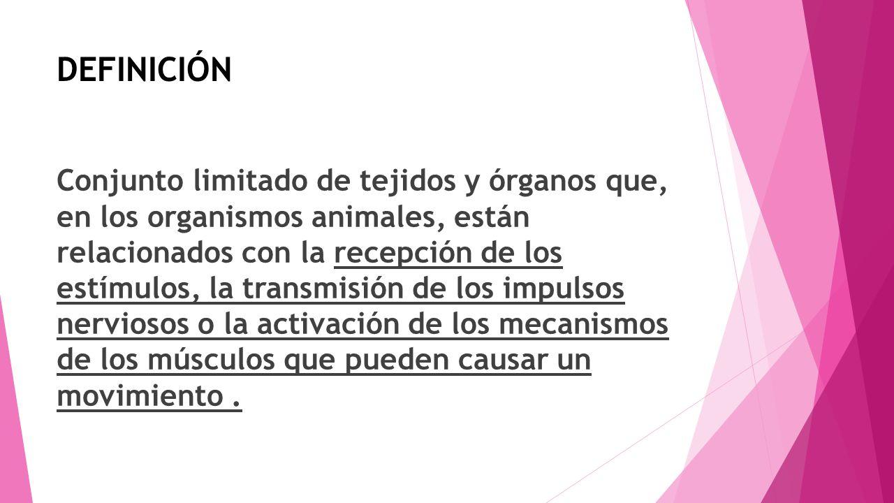 DEFINICIÓN Conjunto limitado de tejidos y órganos que, en los organismos animales, están relacionados con la recepción de los estímulos, la transmisió