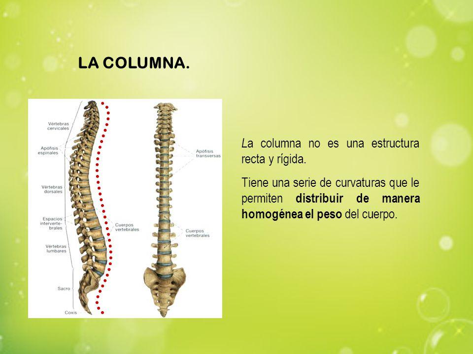 L a columna no es una estructura recta y rígida. Tiene una serie de curvaturas que le permiten distribuir de manera homogénea el peso del cuerpo. LA C