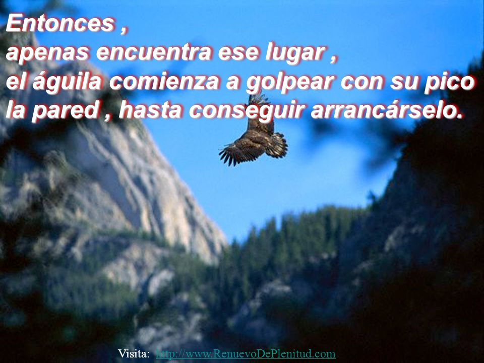 Ese proceso consiste en volar hacia lo alto de una montaña y refugiarse en un nido, próximo a una pared, donde no necesite volar.