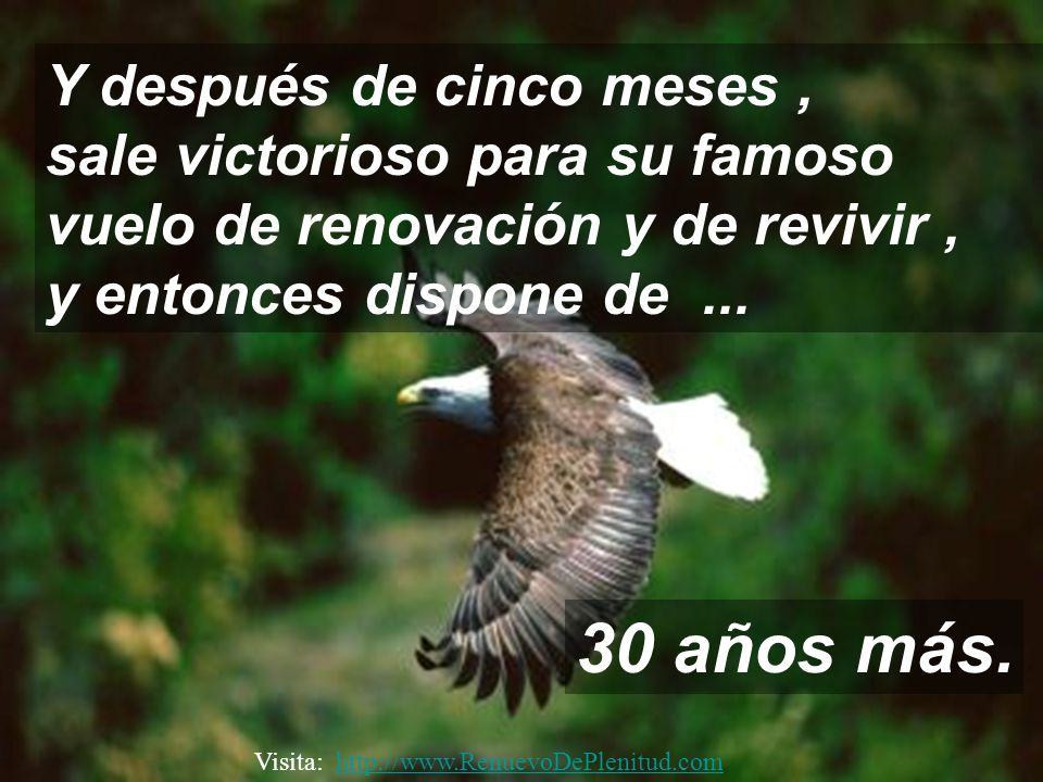 Cuando las nuevas uñas comienzan a nacer, prosigue arrancando sus viejas plumas. Visita: http://www.RenuevoDePlenitud.comhttp://www.RenuevoDePlenitud.