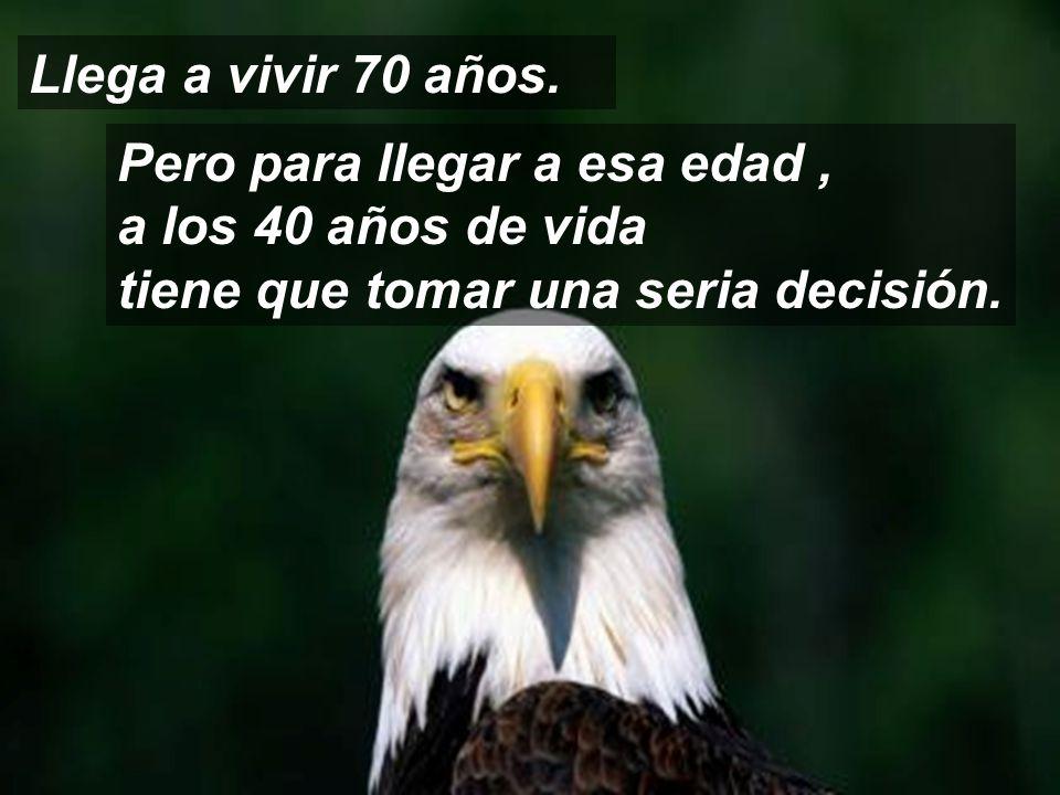 El águila, es el ave que posee la mayor longevidad de su especie.