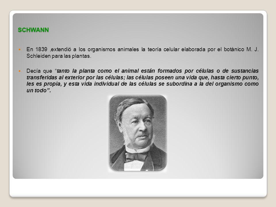 SCHWANN En 1839,extendió a los organismos animales la teoría celular elaborada por el botánico M. J. Schleiden para las plantas. Decía que tanto la pl