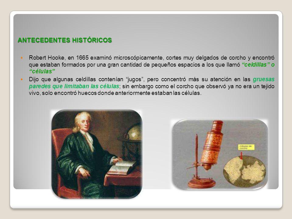 ANTECEDENTES HISTÓRICOS Robert Hooke, en 1665 examinó microscópicamente, cortes muy delgados de corcho y encontró que estaban formados por una gran ca