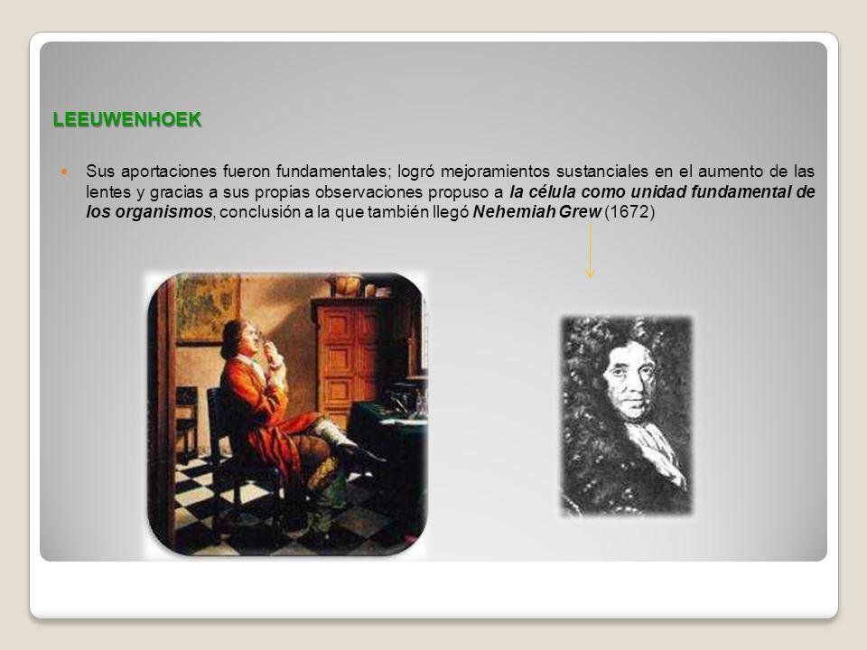 LEEUWENHOEK Sus aportaciones fueron fundamentales; logró mejoramientos sustanciales en el aumento de las lentes y gracias a sus propias observaciones