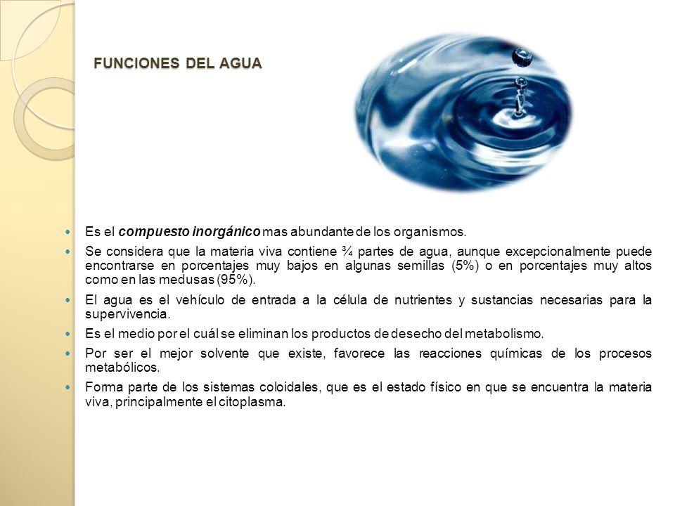 FUNCIONES DEL AGUA Es el compuesto inorgánico mas abundante de los organismos.