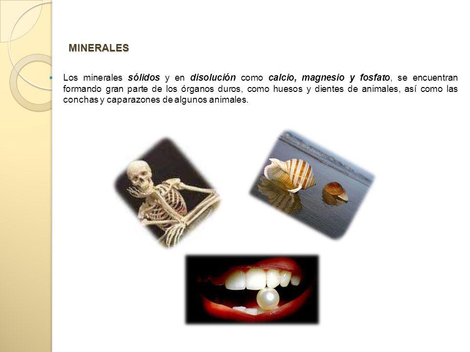 MINERALES Los minerales sólidos y en disolución como calcio, magnesio y fosfato, se encuentran formando gran parte de los órganos duros, como huesos y dientes de animales, así como las conchas y caparazones de algunos animales.