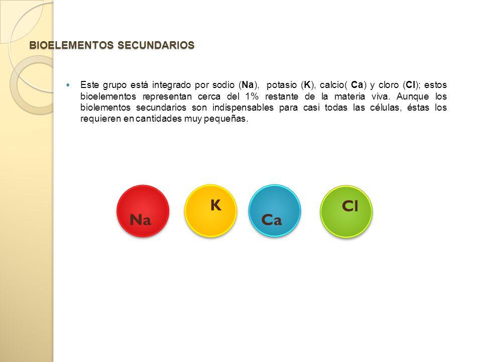 BIOELEMENTOS SECUNDARIOS Este grupo está integrado por sodio (Na), potasio (K), calcio( Ca) y cloro (Cl); estos bioelementos representan cerca del 1% restante de la materia viva.