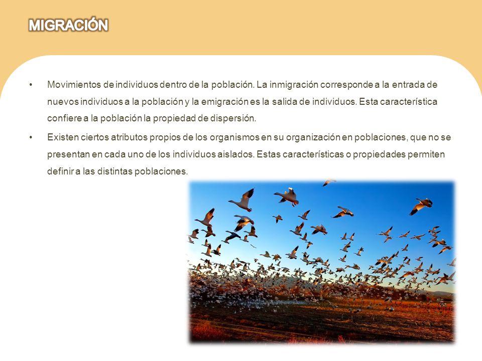Movimientos de individuos dentro de la población. La inmigración corresponde a la entrada de nuevos individuos a la población y la emigración es la sa