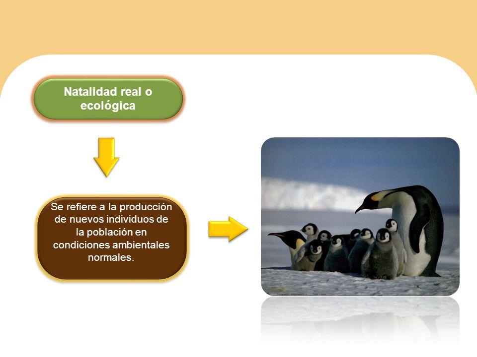 Natalidad real o ecológica Se refiere a la producción de nuevos individuos de la población en condiciones ambientales normales.