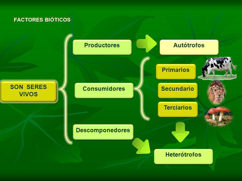 SON SERES VIVOS SON SERES VIVOS Productores Consumidores Descomponedores Primarios FACTORES BIÓTICOS Secundario Terciarios Autótrofos Heterótrofos