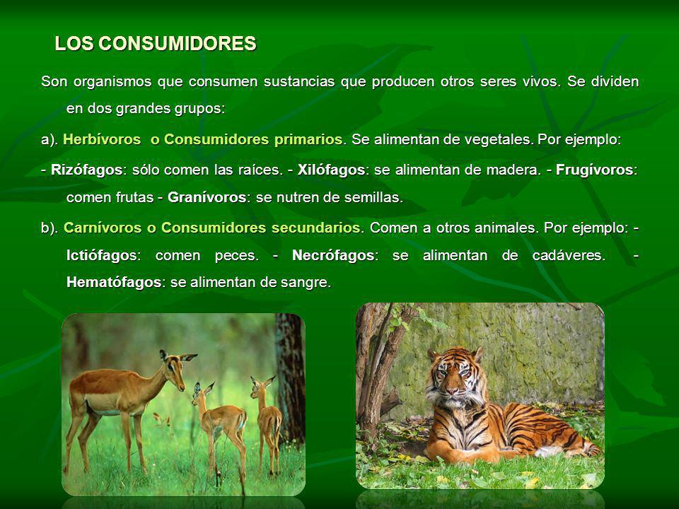 LOS CONSUMIDORES Son organismos que consumen sustancias que producen otros seres vivos. Se dividen en dos grandes grupos: a). Herbívoros o Consumidore