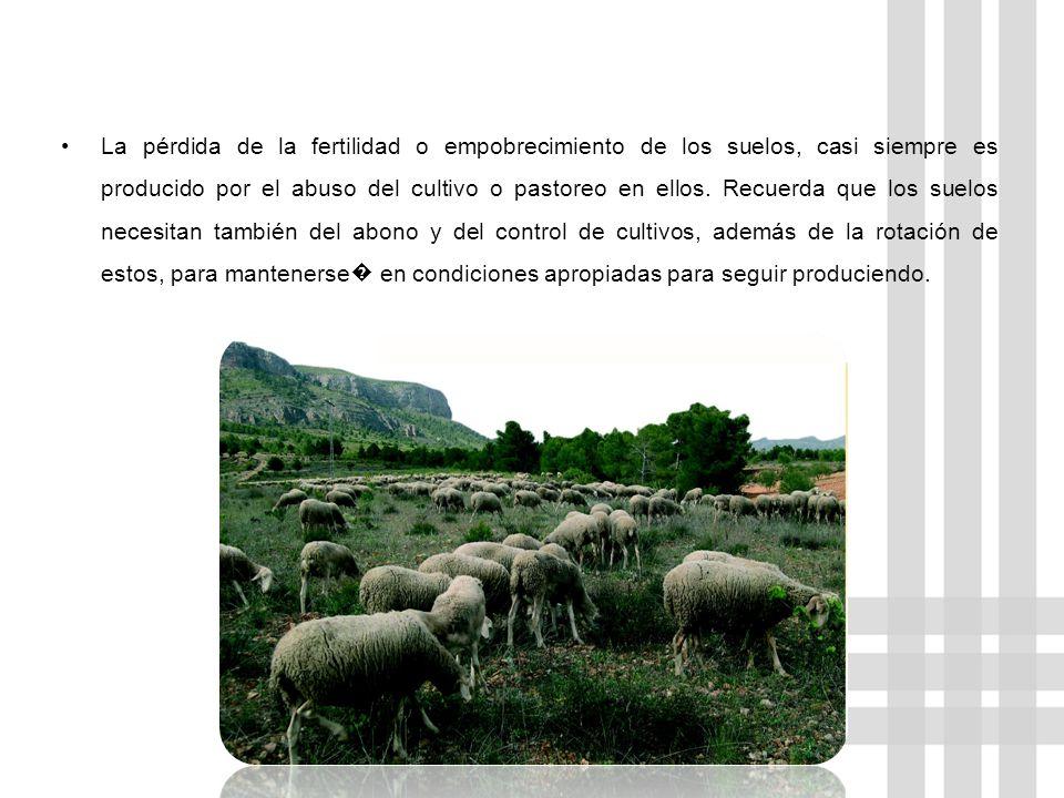 La pérdida de la fertilidad o empobrecimiento de los suelos, casi siempre es producido por el abuso del cultivo o pastoreo en ellos. Recuerda que los