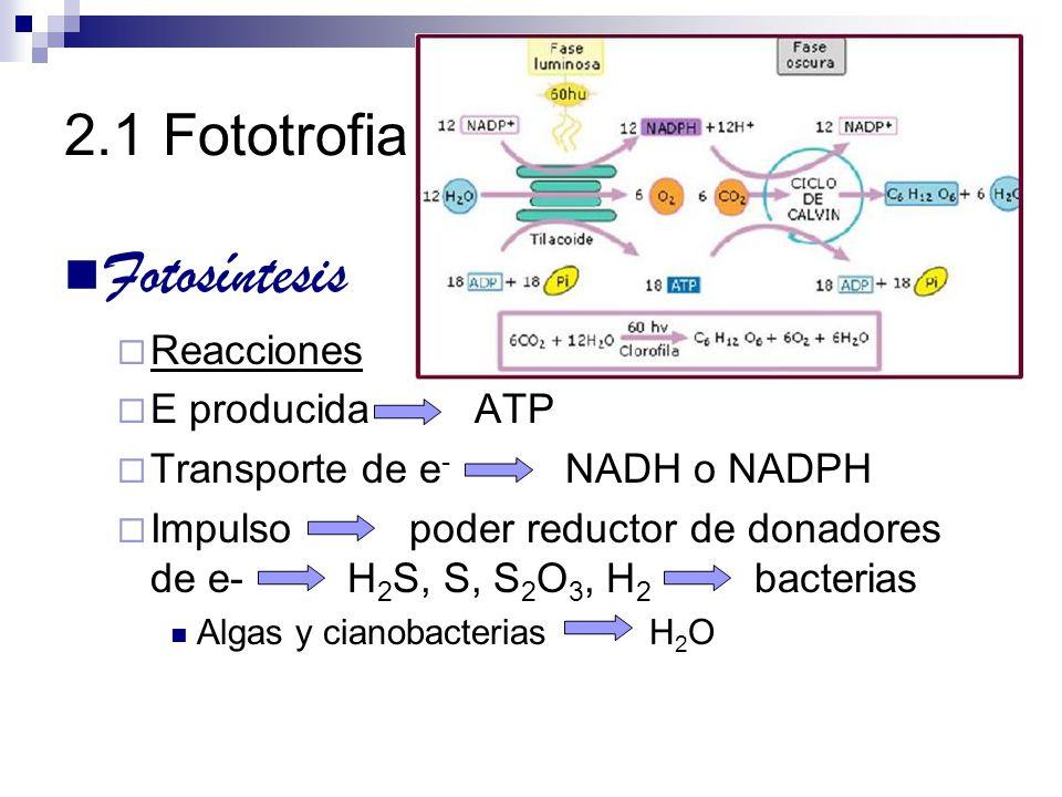 2.1 Fototrofia Fotosíntesis Reacciones E producida ATP Transporte de e - NADH o NADPH Impulso poder reductor de donadores de e- H 2 S, S, S 2 O 3, H 2