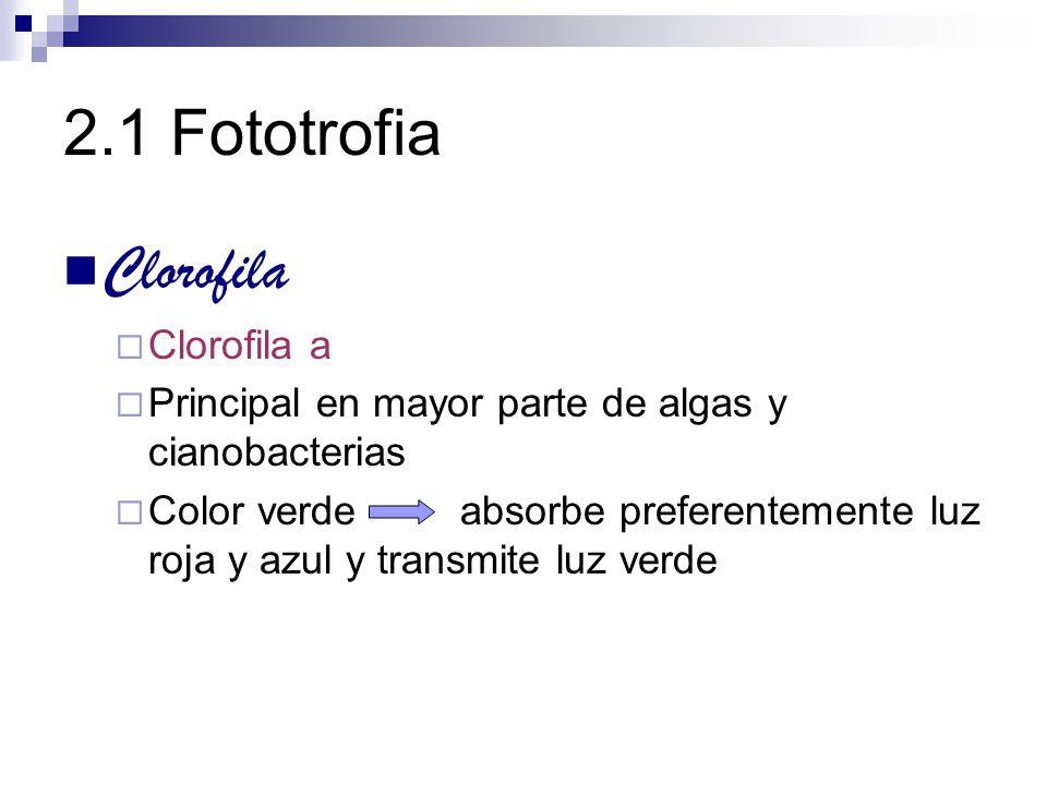 2.1 Fototrofia Clorofila Clorofila a Principal en mayor parte de algas y cianobacterias Color verde absorbe preferentemente luz roja y azul y transmit
