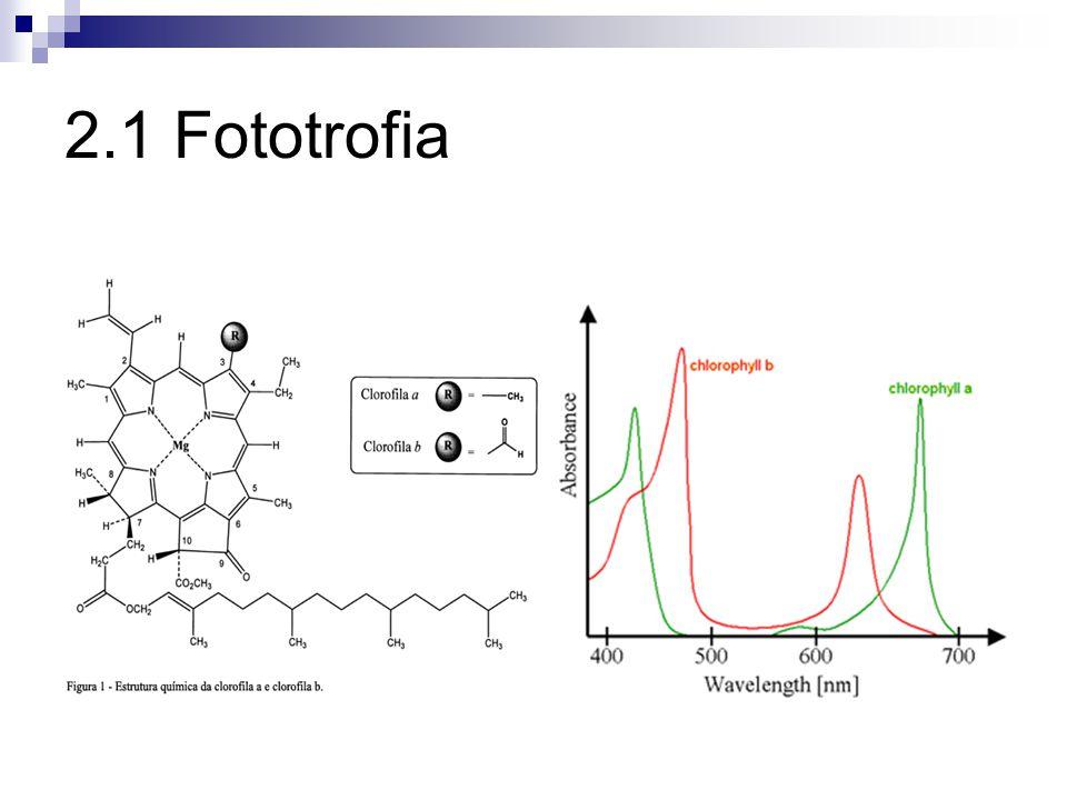 Clorofila Clorofila a Propiedades de un pigmento se expresan por su espectro de absorción indica el grado en que el pigmento absorbe luz de diferentes longitudes de onda
