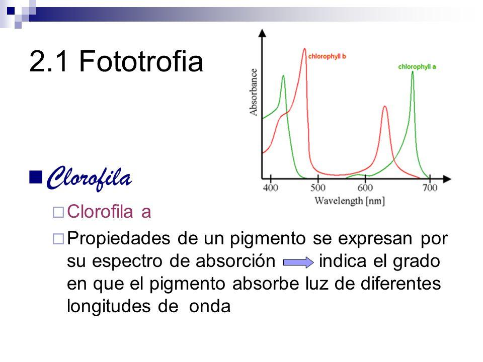 Clorofila Clorofila a Propiedades de un pigmento se expresan por su espectro de absorción indica el grado en que el pigmento absorbe luz de diferentes